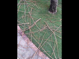 暖かくなって、葉が出てくる前に、庭の木の枝を落としました。